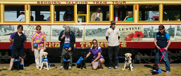 Seeing Eye Dogs Australia staff and dogs posing in front of the Anzac Centenary Tram